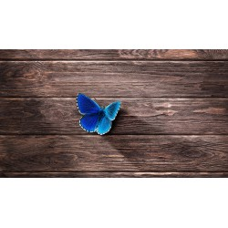 Butterfly - Stampa su tela...